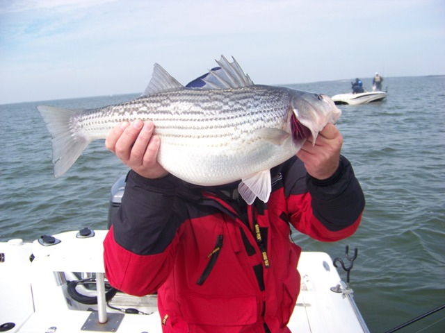 Lake tawakoni fishing guide tawakoni striper guide cliff for Lake tawakoni fishing guides