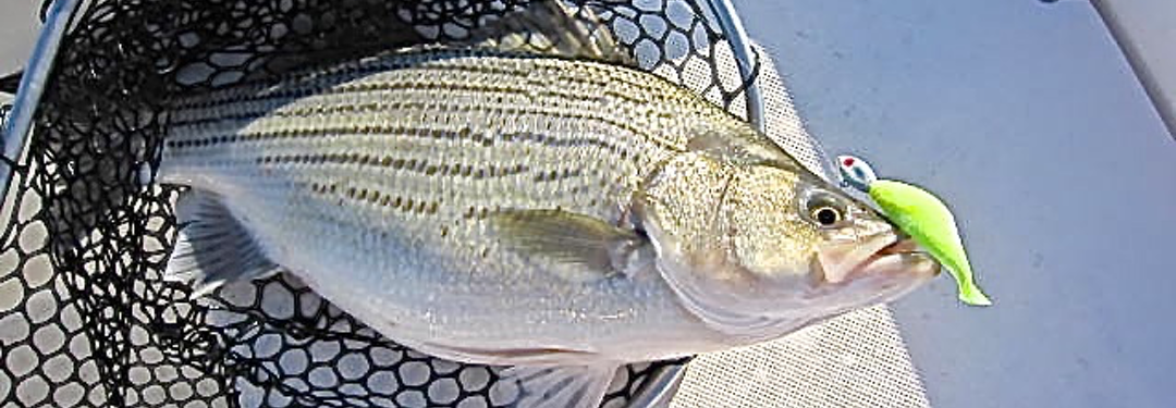 Tawakonistriperguide hm tawakoni striper guide for Lake tawakoni fishing guides